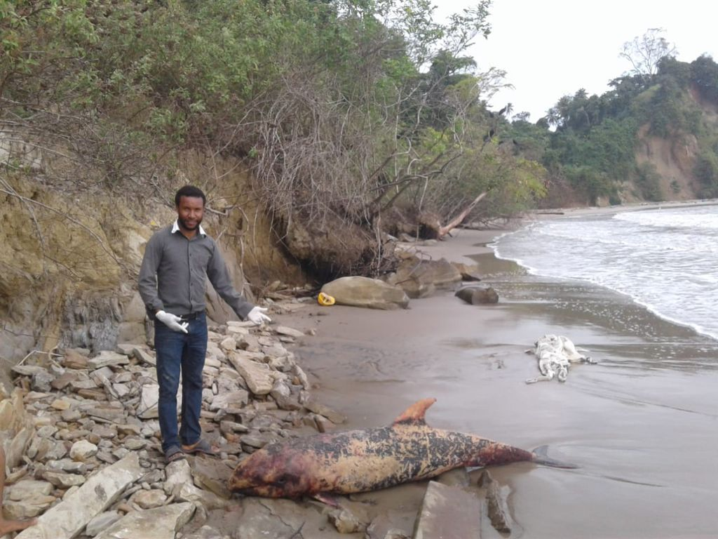 Eric Lewis, curator of the Moruga museum, stands next to a dead whale which washed up at the La Lune beach in Moruga yesterday.